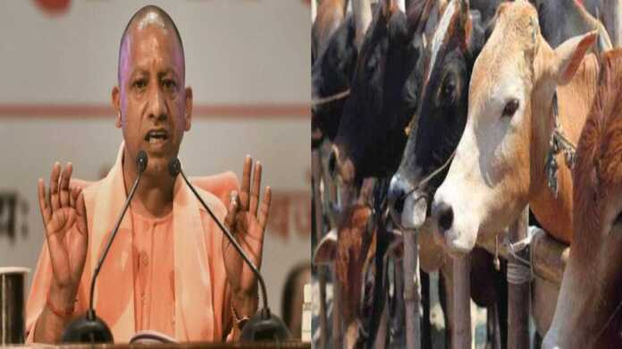 law against cow slaughter