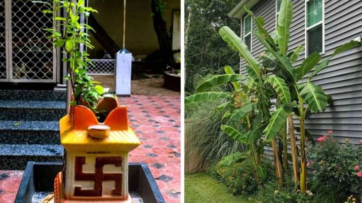 Basil or banana tree vastu tips